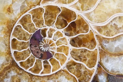 ammonite_2_by_sveltephoto-d294gob